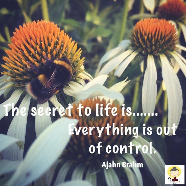 Ajahn Brahm, Buddhist monk, meditation, mindfulness, spirituality, Quotes, words of wisdom, words and sayings, motivational quote, inspiration, quote of the day,