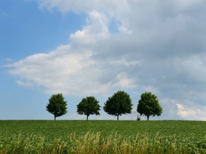 The four trees moral story,