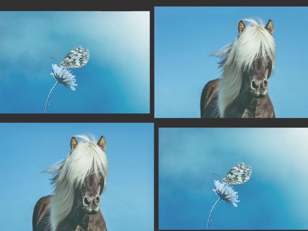 The horse and butterfly moral story,