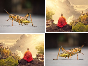 The Monk and the grasshopper moral story,