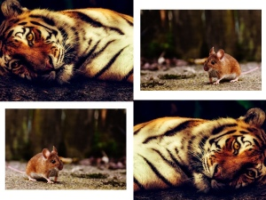 The wise mouse and bouncy tiger moral story,