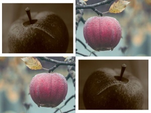 The one bad apple moral story,